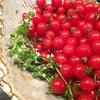 マイクロトマトは豪快に!サッパリ甘い冷え冷えトマトはよ~く冷やして食べましょう♡