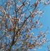 ますます春らしくなってきた、が… (追記あり)