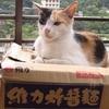 電車に揺られて台湾の猫村「猴硐(ホウトン)」に行ってみた。