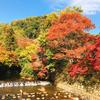 京都【観光・乗り物】叡山ケーブル・ロープウェイに乗車して「比叡山頂駅」へ!バスにも乗車して紅葉の横川へ!