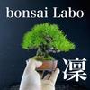 ミニ盆栽の世界