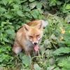 盛岡市動物公園ZOOMOで山歩き