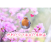 YOUTUBEで見つけた、可愛くて面白いおすすめ鳥動画まとめ