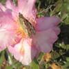 凍蝶の心をもって生きるべし