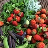 自然農法のイチゴから見る人間のわがままとそれを叶えるための代償