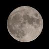 「月」の撮影 2021年8月22日(機材:コ・ボーグ36ED、スリムフラットナー1.1×DG、E-PL5、ポラリエ)
