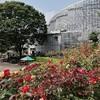 【おすすめ】小田原フラワーガーデンは今バラが綺麗です。