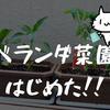 【ベランダ菜園1】ベランダ菜園、はじめたよ!