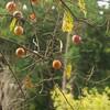 秋の木の花と恒例の・・・