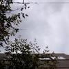 作曲工房 定点観察 2017-04-24(月)小手毬、行方不明。
