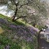 春春爛漫❀˳꒰*ॢ´◡`*ॢ꒱❀˳