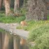 Deer at the shore of a lake