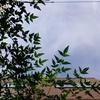 作曲工房 朝の天気 2017-08-05(火) 晴れ