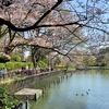 桜を見に 洗足池、多摩川台公園を回遊