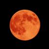 極・月は出ているか?