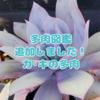 たにログ112 多肉図鑑【か・き】を更新しました!