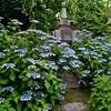 霊源院の甘茶の庭。甘露庭特別公開。