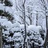 暗闇の中 朝3時に雪掻き開始