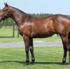 シルク15年産一口初心者全馬評価24 シルクユニバーサルの15