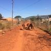 南アフリカ共和国 ~私がゴゴゴに来た理由~