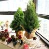 【生花レッスン】クリスマスツリー制作のご案内