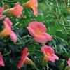 7月は「文月」。由来と季節のお花について