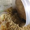 ニジイロ菌糸ビン産卵セットの様子菌糸2