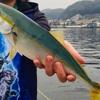 横須賀ハシゴ釣行!うみかぜ公園→浦賀陸軍桟橋で念願の青物ゲット♪♪