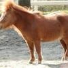 9/22 鉄板軸馬&爆穴推奨馬
