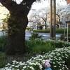 春のお散歩〜♪