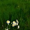 記憶の中の花