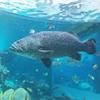 沖縄旅行レポート。②日目の3 【ハート岩~美ら海水族館】