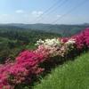 弥高山の花が綺麗だったので頂上まで登ってみた