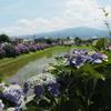 梅雨のお出かけ:のどかな景色と色とりどりの紫陽花がたくさん