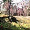 梅の魅力〜春の訪れを感じよう【京都・城南宮の梅】