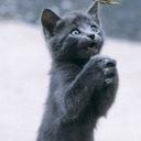 南の猫の里帰り雑記