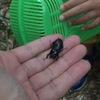 千葉県印西市・草深の森でカブトムシ採集!正確な駐車場・地図・住所の場所!