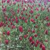 庭木植え付け作業とまたまた花苗購入