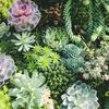 【観葉植物】幸福度や集中力アップに繋がる!?