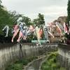 神田川ランニング〜今年も元気に鯉のぼりが泳いでいました〜