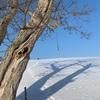 116.雪原と影と花