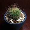 紫盛丸は淡々と生長を続けています