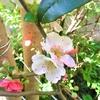 2021-03-26 花の写真が不満で