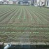 今日の田んぼ(゚∀゚)28