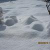 雪の朝 雪かきは大変💦💦 雪国の皆様お見舞い申し上げます