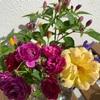 今年の秋のバラ