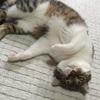 巷で大人気(?)のうちの猫の画像でお茶をにごす更新