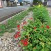 神原町花の会(花美原会)(265)    花いっぱい活動の最終目標・町内の花ライン形成