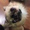 長文のブログを読むのが苦手な方でも、読みやすい⁈僕の愛犬紹介。