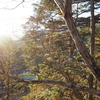 東京の秘境。木漏れ日がウットリするほどきれいでした♫